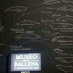 Foto de Museo de La Ballena