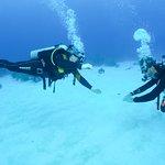 Bahia Divers照片