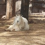 Foto di Bearizona Wildlife Park