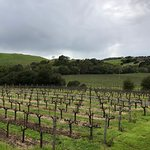 Foto de Napa Valley Wine Country Tours