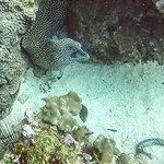 Mooray Eel, Daymaniyat Islands
