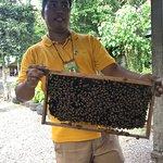 Foto de Bohol Bee Farm Restaurant