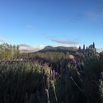 Gorgeous outlook beyond the fields of lavender to the mountains!