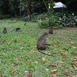 Foto de Rajah Sikatuna Protected Landscape