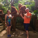 Breakfast with the Orangutang at the Singapore Zoo
