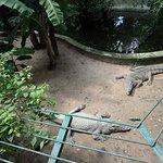 Photo of Zoo and Botanical Gardens