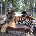 Photo of Tiger Kingdom Chiang Mai