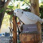 Zdjęcie Platanos