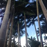 The king palm canopy
