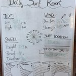 Daily Surf Report