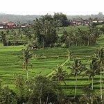 Ala Bali Tour照片