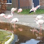 Photo of AquaZoo Friesland