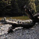 Foto de Fantail Falls