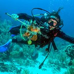 On-site dive shop including PADI certification classes