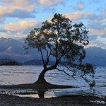 NZ's iconic Wanaka tree.