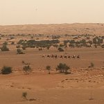 Photo de Al Maha, A Luxury Collection Desert Resort & Spa
