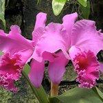 Regardless of the season, a visit to Daniel Stowe Botanical Garden will be a rewarding one.