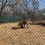 Amarillo Zoo Foto