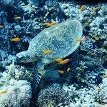 Photo de Poseidon Divers