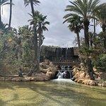Foto de Parque El Palmeral