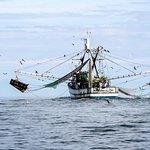 Shrimp boat?