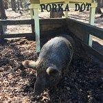 PORKA DOT - what else can I say