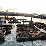 Foto di Pier 39