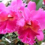 Foto de Akatsuka Orchid Gardens