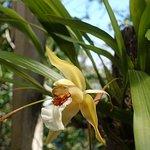 Photo de Monteverde Orchid Garden