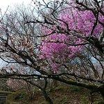 ภาพถ่ายของ Iwamotoyama Park