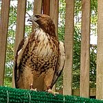 Photo of Cascades Raptor Center