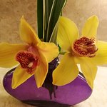 Photo de Orchids