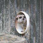 Hamilton Zoo Photo