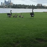 Swan River Photo