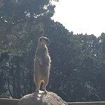 Photo of Wellington Zoo