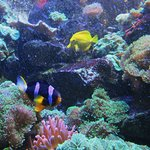 Photo of Grand Aquarium de Touraine