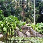 Beau bassin avec ses carpes Koi