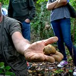 Valter a professional truffle hunter and a great white precious truffle