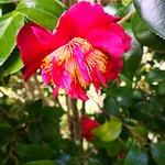 Фотография Hortensia Gardens Tea House