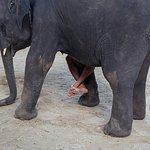 Слоники на Kai Bae Beach
