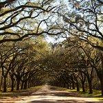 The oak avenue
