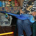Upside down macaw