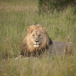 Sibuya Game Reserve: 4 -Star Luxury Tented Camps and Lodge Foto