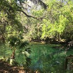 Photo of Blue Spring State Park