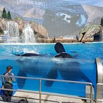 Photo de SeaWorld San Diego