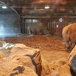 Photo of Dublin Zoo