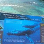 Photo de Hanauma Bay Nature Preserve
