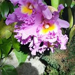 beautiful plants/flowers