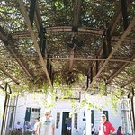 outside mansion under live canopy