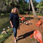 Photo de Sarasota Jungle Gardens